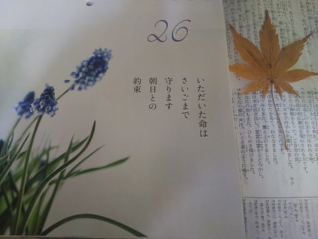 DSC_5316~2.JPG